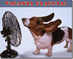 vacanta_placuta