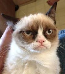 pisica.jpg