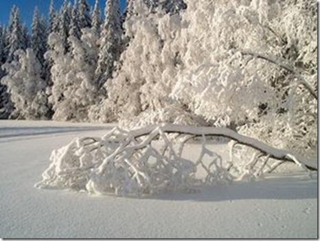 zapada_iarna