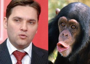 dan_sova_cimpanzeu.jpg