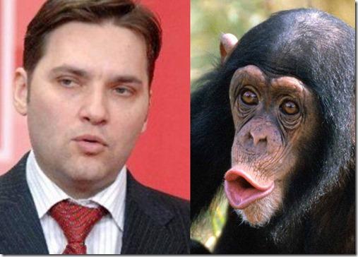 dan_sova_cimpanzeu