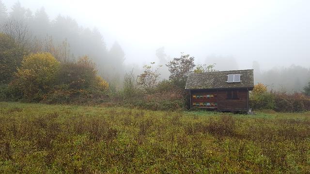 fog-1923403_640